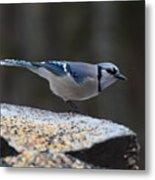 Natures Birds 66 Metal Print