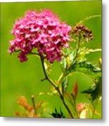 Nature's Bouquet Metal Print