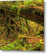 Nature's Bridge Metal Print
