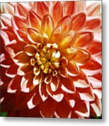 Nature's Brilliance Metal Print