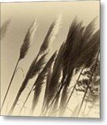 Natures Brushes Metal Print