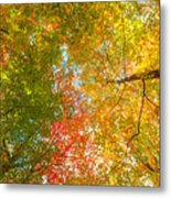 Natures Canopy Of Color Metal Print