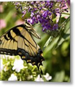 Nature's Canvas Metal Print