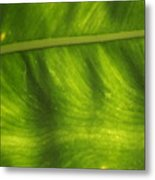 Nature's Fan Metal Print