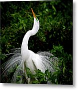 Nature's Glory Metal Print