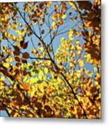 Natures Gold Metal Print