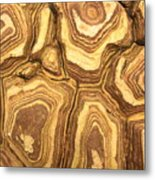 Nature's Interesting Patterns Metal Print