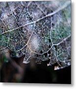 Nature's Lace Metal Print