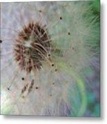 Natures New Life 1 Metal Print