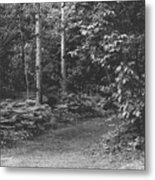 Natures Path Metal Print