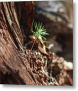 Natures Renewal  Metal Print