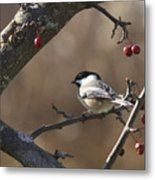 Natures Small Wonders Metal Print