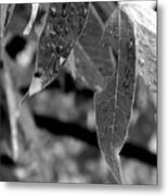 Nature's Tears Metal Print