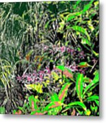 Nature's Way Metal Print by Eikoni Images