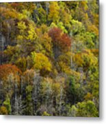 Nc Fall Foliage 0561 Metal Print