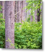 Near The Clearing Metal Print