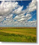Nebraska Wheat Fields Metal Print
