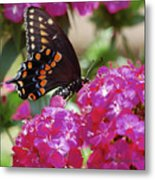 Nectar Of Pink Passion Metal Print