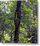 Needle Hook Tree Metal Print