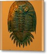 Neometacanthus Fossil Trilobite Metal Print