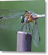 Neon Dragonfly Metal Print