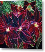 Neon Poinsettias Metal Print