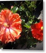 Neon-red Hibiscus Flowers 6-17 Metal Print