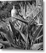 Nepenthe Bird Of Paradise B And W Metal Print