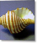 Neptune Whelk Seashell Metal Print
