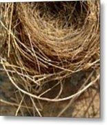 Nest 913 Metal Print