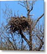 Nesting Bald Eagle Metal Print