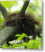 Nesting Place Metal Print