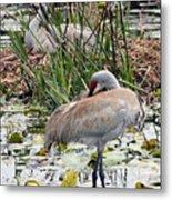 Nesting Sandhill Crane Pair Metal Print by Carol Groenen