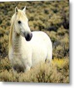 Nevada Wild Horses 3 Metal Print