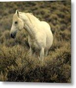 Nevada Wild Horses 4 Metal Print