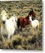 Nevada Wild Horses Metal Print by Marty Koch
