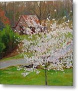 New Blossoms Old Barn Metal Print