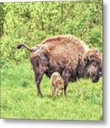 New Born Bison Metal Print