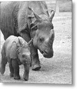 New Born Rhino And Mom Metal Print