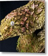 New Caledonian Giant Gecko Metal Print