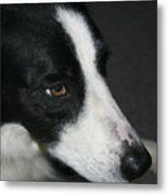 New Dog Friend Metal Print