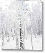 New England - Snow Covered Forest Metal Print