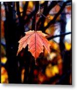 New England Fall - Lone Metal Print