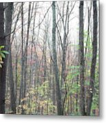 New England Forest Metal Print
