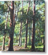New Forest Trees With Shadows Metal Print