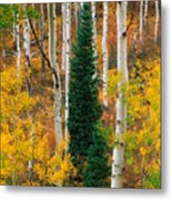 New Forests Metal Print