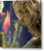 New Friends Metal Print by Chris Lord