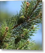 New Growth Pinecone At Chicago Botanical Gardens Metal Print