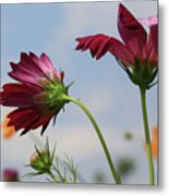 New Jersey Wildflowers In The Wind Metal Print