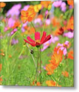 New Jersey Wildflowers Metal Print